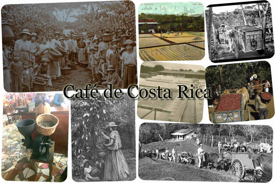 collage de cafe de costa rica
