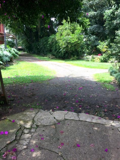 Jardín de Casa de Alfredo Stanfort