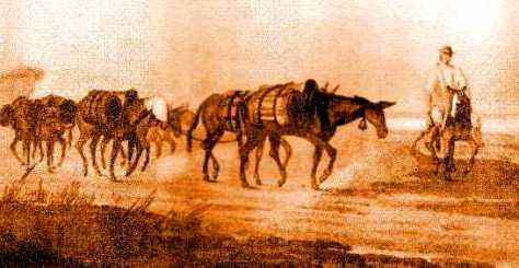 Resultado de imagen para la mula como medio de transporte en costa rica