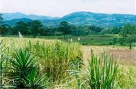 Sitio Arqueológico Guardiria | Sistema de Información Cultural de Costa Rica